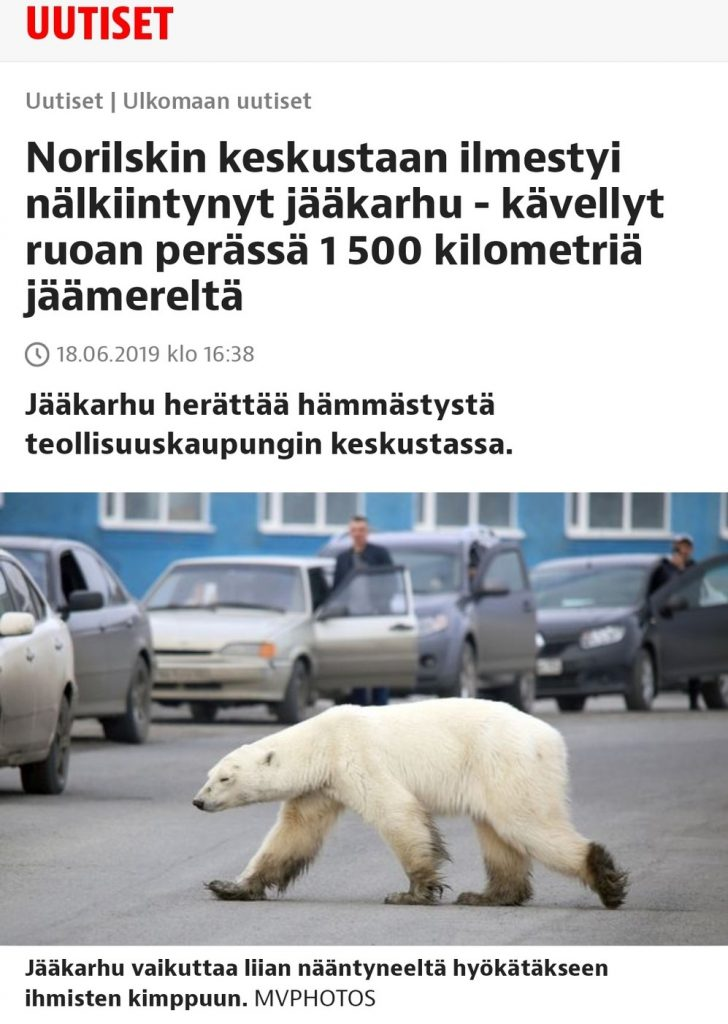Polar bear Russian city